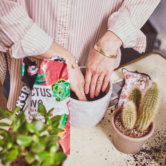 Potgrond Voor Cactussen.Cactus Love Potgrond Undergreen Nl