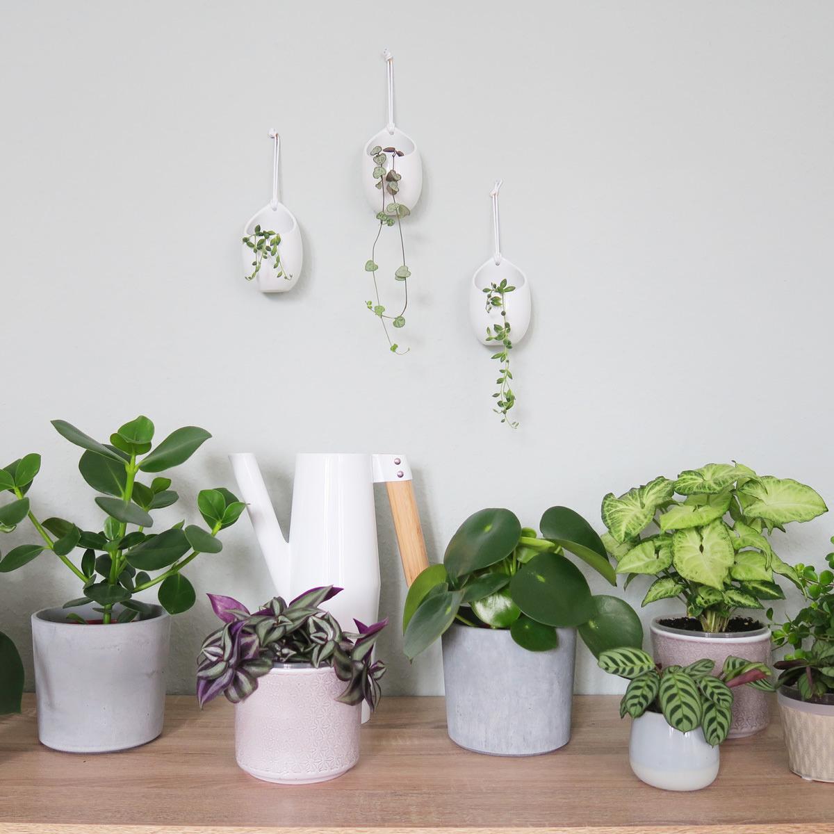 Onwijs Tips en trucs om uw planten water te geven tijdens vakantie QW-73