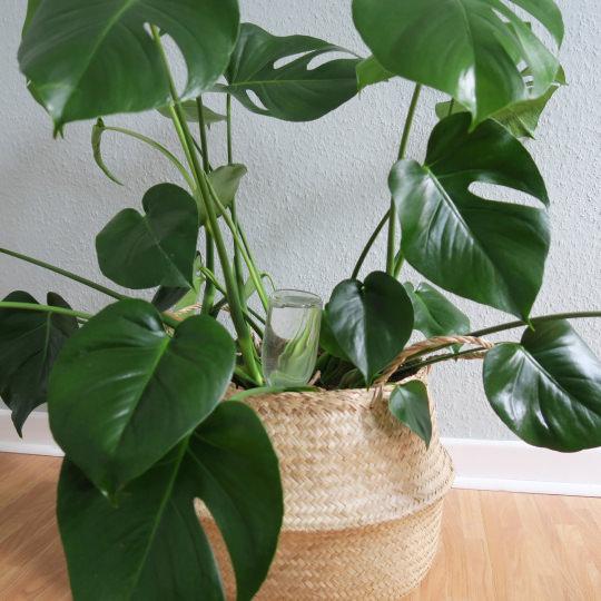 Verwonderend Tips en trucs om uw planten water te geven tijdens vakantie TJ-05